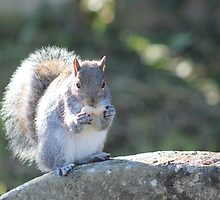 Squirrel On The Stone by James1968
