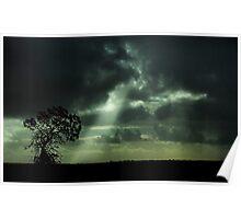 Roadside Banksia Poster