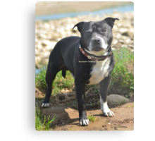 Handsome Boy Metal Print