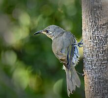 Grey Honeyeater Defying Gravity by GrannyMay