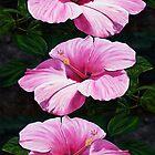 Pink Hibiscus  by lyndseyart