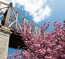 Cherry Blossoms Under the Queensborough Bridge by W. Lotus