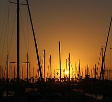 Masts and Palm Trees by Timothy Frink