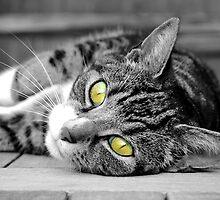 Green eyed cat by LucyFreeman