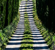 Cypress Avenue, Lago Montepulciano, Tuscany, Italy by Andrew Jones
