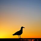 Sea Gull Sunset by RichCaspian