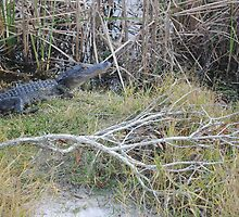 Desolate Area Alligator by smileychikk123