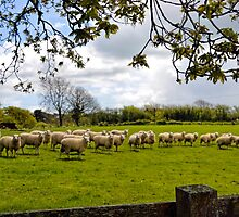 All Of  Ewe Say Cheese...... by lynn carter