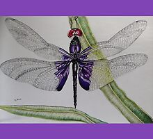 dragonfly by jjstanley26