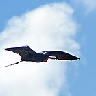 Great Frigate Bird  [Fregata minor] by Yukondick