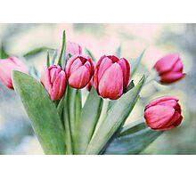 Twilight Tulips Photographic Print