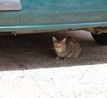 Cat Under Turquoise Car  by Scott Larson