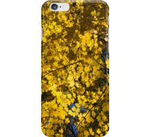 Under the Trees - Lambton Woods, Toronto, Canada iPhone Case/Skin