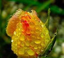A bejewelled rosebud. by hoppyc