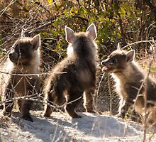 Hyena cubs, playful. by brians101