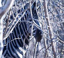Zebra camo. by brians101