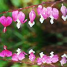 Bleeding Hearts Reflection by Tori Snow