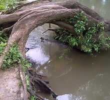 A tree bridge over troubled water by stargirl28