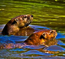 2014 May River Otters No 2 by Rick  Grisolano Photography LLC