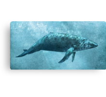 Song of the Sea  Canvas Print