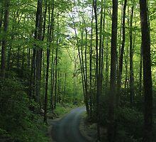 Winding Road by Bob Hardy