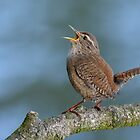 Northern Wren - I by Peter Wiggerman