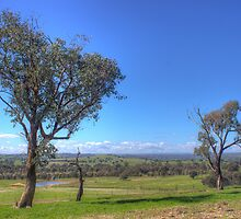 Easter Bunny Hill, NSW by shaynetwright