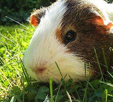 Guinea pig - iPhone case by LovelyMonster97