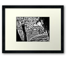 Sunlit Tree and Fountain, Franklin NJ USA Framed Print