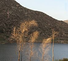 El Capitan Reservoir, San Diego County, California, 11 by heatherfriedman