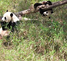 Mommy and Baby Panda by Michelle Callahan