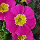 Pink Flower Pillow by relayer51