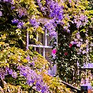Wisteria by JEZ22