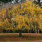 Weeping Gold by cclaude