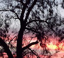 Sun setting behind desolate trees by Joy-by-Jennie