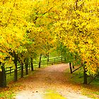 Follow the yellow leafed road - Exeter NSW Australia by candysfamily