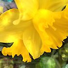 Daffodil Abstract by Fay270