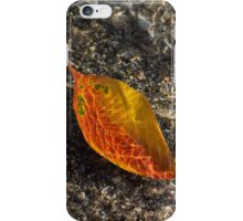 Autumn Colors and Playful Sunlight Patterns - Cherry Leaf iPhone Case/Skin