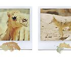Camel Coyote Polaroids by Indea Vanmerllin