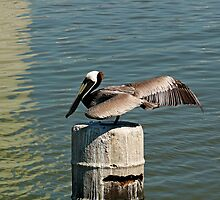 Ready for launch by Robert Brown