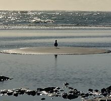 Seagull Looking out to Sea by MHen