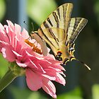 Swallowtail Butterfly by HolidayMurcia