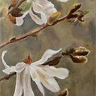 White Magnolia by JolanteHesse