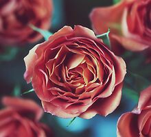 Vintage Roses by NicoleCampbell