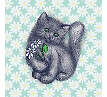 Cute Kitten with Daisies Photographic Print