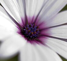 Spring Flower by Valerija S.  Vlasov