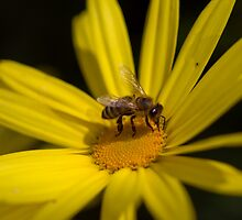 Busy Bee by Valerija S.  Vlasov