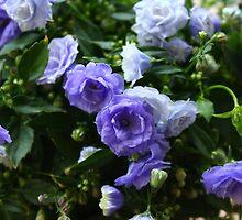 Blue Beauties by karina5