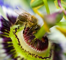 Passion Bee by Valerija S.  Vlasov