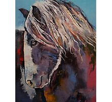 Highland Pony Photographic Print